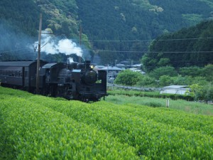 手摘み川根茶