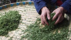 蒙頂山 茶農家訪問