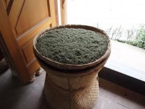 四川の茶農家さんにて
