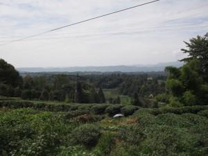 名山の茶畑