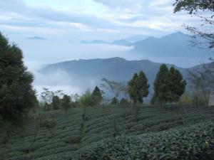 杉林渓茶区