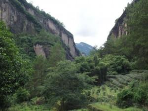 武夷山 水簾洞茶区